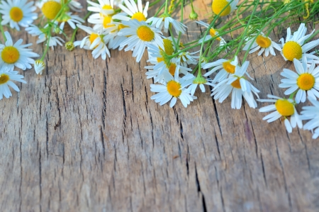 Fresh chamomile flowers on the wooden table Stock Photo - 21451591