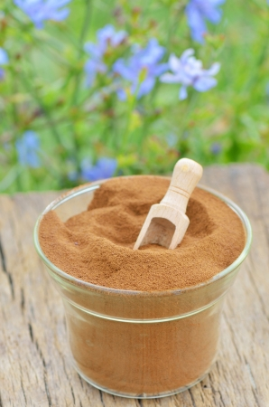 chicory: details of chicory powder shoot in nature Stock Photo
