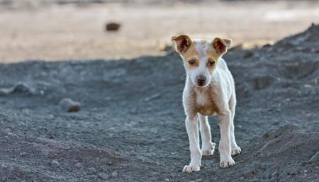 Obdachlose Hund wartet etwas in einer Schlacke