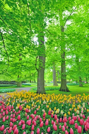 spring tulips in park in morning time Stock Photo - 21451784