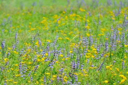 mother earth: thyme flowers on field in summer time Stock Photo
