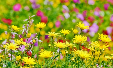 beautiful yellow flowers in floral background Stock Photo - 21452142