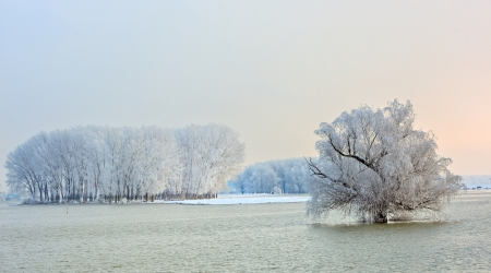 winter trees covered with frost Stock Photo - 21451881