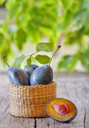 Fresh ripe plums shoot in studio Stock Photo - 21451926