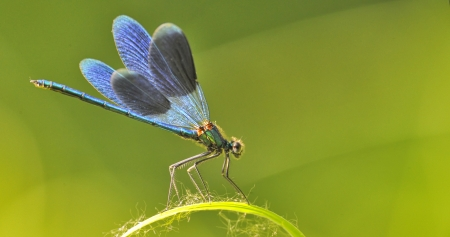dragon fly on a blade of grass on natural background Stock Photo - 21451958