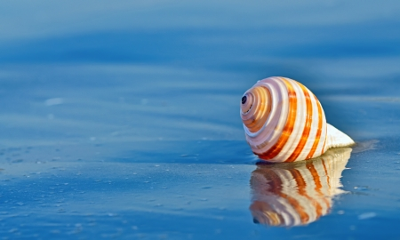 Shell on a beach with reflection in summer time Stock Photo - 21885669