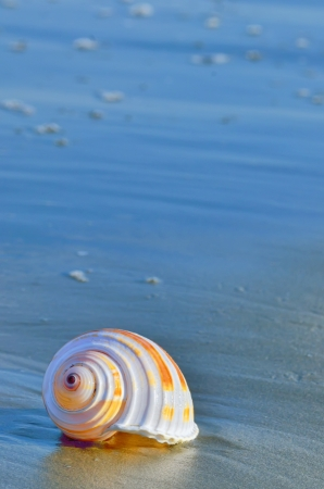 Shell on a beach with reflection in summer time Stock Photo - 21885685