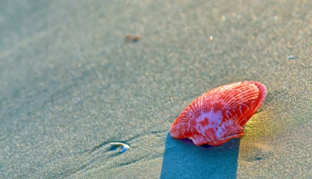 red seashell on sand in sunset Stock Photo - 21885687
