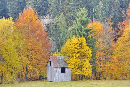 colors of autumn birch forest, closeup Stock Photo - 21885688