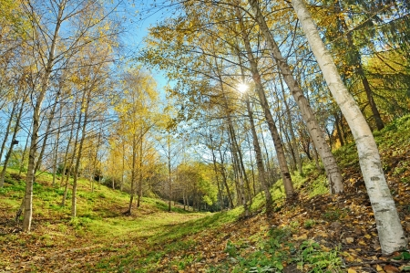 autumn forest shoot in big park Stock Photo - 22116441