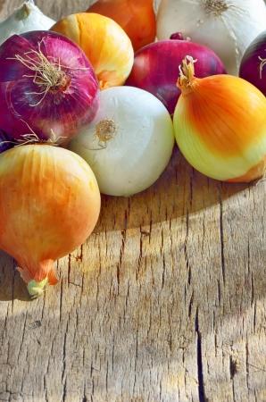 types of onions shoot in studio Stock Photo - 22116444
