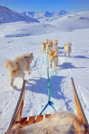 hond sleeën in de lente tijd in Groenland Stockfoto