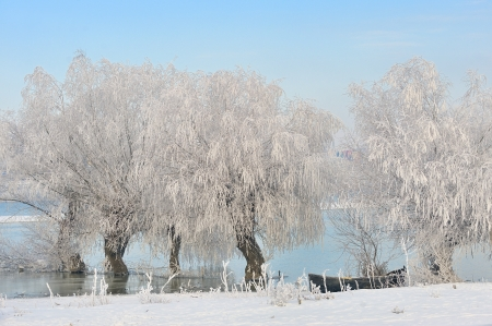 Frosty winter trees near Danube river Stock Photo - 23000471