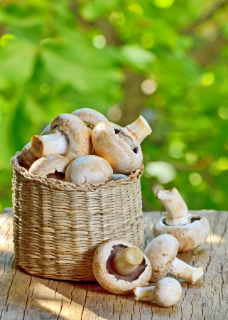 mushrooms in a basket on a wooden background Stock Photo - 23000536