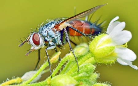 insect fly macro resting on white flower Stock Photo - 23000539
