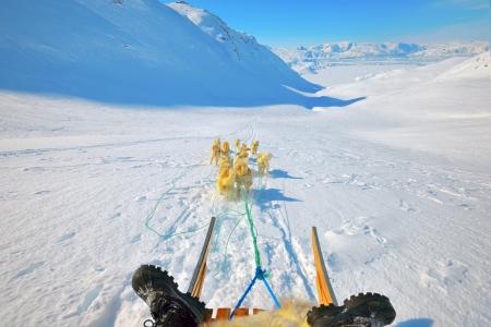 Dog sledding in spring time Stock Photo - 23000543