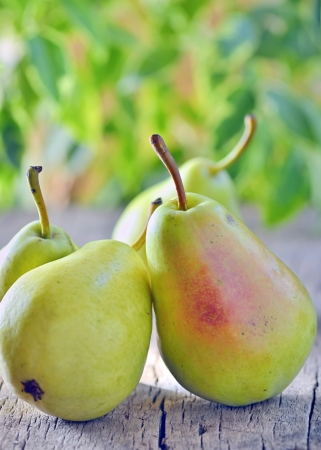harvested pears on old wooden shoot in studio Stock Photo - 23000554