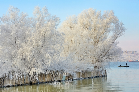 winter trees covered with frost photo