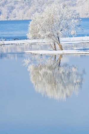 frosty tree in the water mirror Stock Photo - 24201734