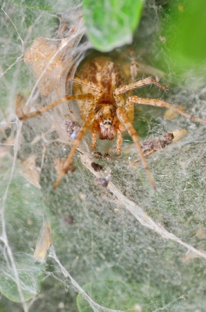 silken: Details of Spider in its web nest Stock Photo