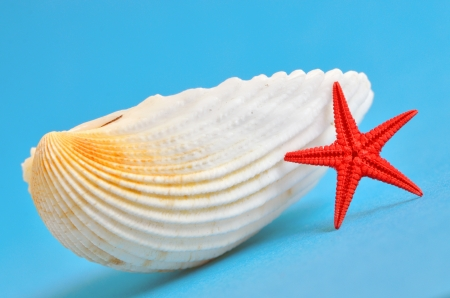 seashell and red starfish on blue background, shoot in studio