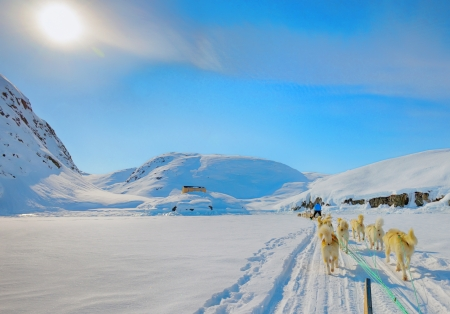 Dog sledding on a wintry Landscape, Arctic North Pole, greenland Stock Photo