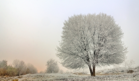 winter landscape of frozen trees in morning time