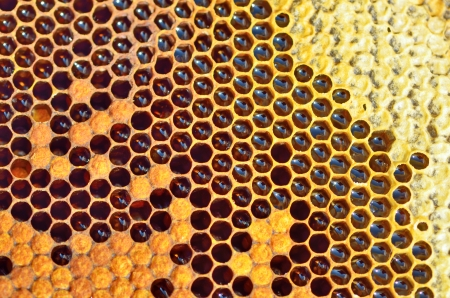 details of unfinished honey in honeycombs