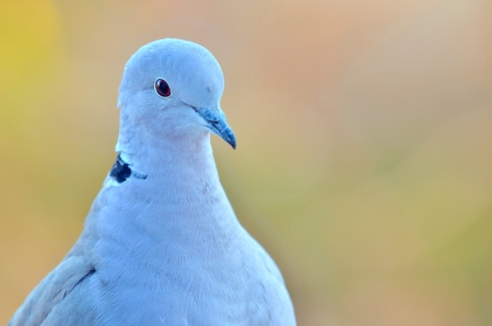macro pigeon shoot in natural background Stock Photo