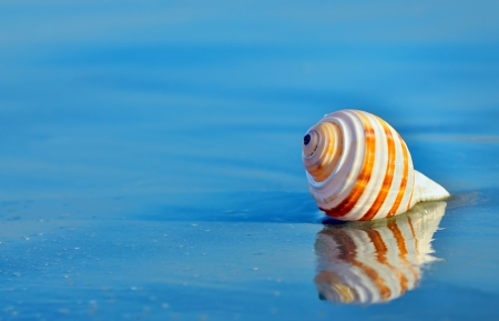 Shell on the beach in summer time Stock Photo