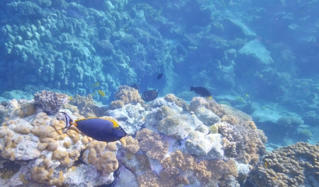 Tropical Fish and Coral Reef  in warm water Stock Photo