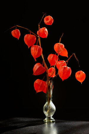 alkekengi: Physalis alkekengi in vase on black table