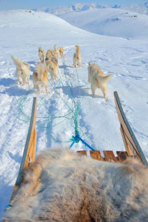 sledging: slittino cane in primavera in Groenlandia Archivio Fotografico