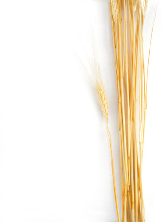fascicle: frame wheat ears on white  Stock Photo