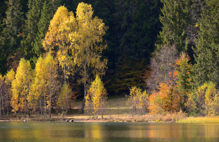 mere: Autumn  with the yellow foliage, reflected in Lake Saint Ann