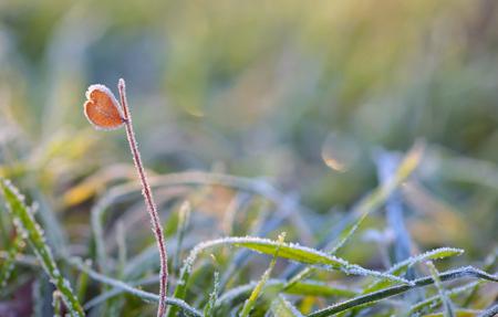 leaf shape: Macro frozen grass and heart shape leaf