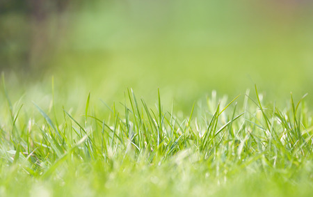 frontyard: Defocused grass on field in spring time
