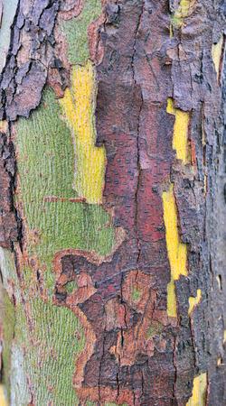 Baumrinde Textur im Wald