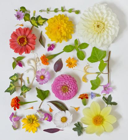Summer flowers pattern on white background Stock fotó