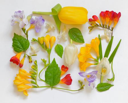 Spring Flower Frame on white background Stock Photo