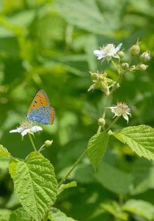 Orange butterfly on summer yellow flower Stock Photo
