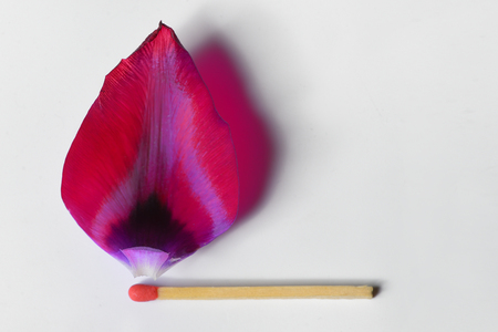 Burning match from tulip leaf concept