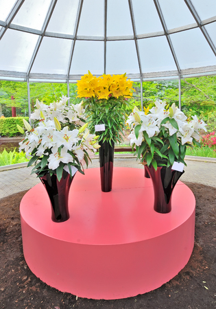 Yellow and white lilies in black vases