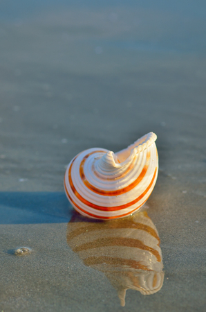 Sea shell on the sandy beach and reflexion Stock Photo
