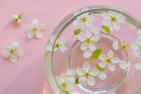 Cherry blossom in vase on pink background