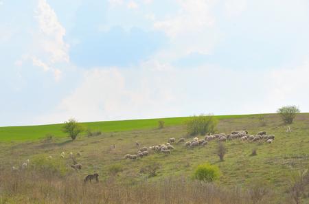 Herd of ships in spring time