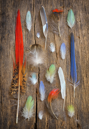 parot: Collection of different color feathers on old wooden table