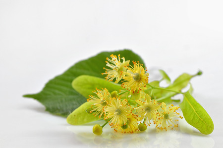 Linden blossoms flowers and reflexion on table Stock Photo