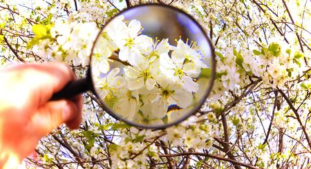 Colored flowers under magnifying glass macro close up Stock Photo