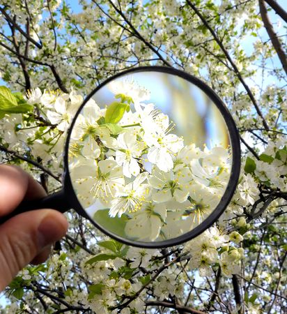 white flowers under magnifying glass in human hand photo